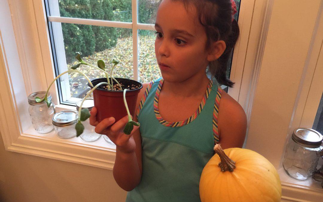 Citrouilles d'Halloween & les graines mystérieuses