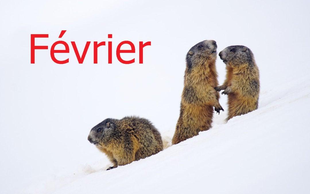 février et le jour de la marmotte
